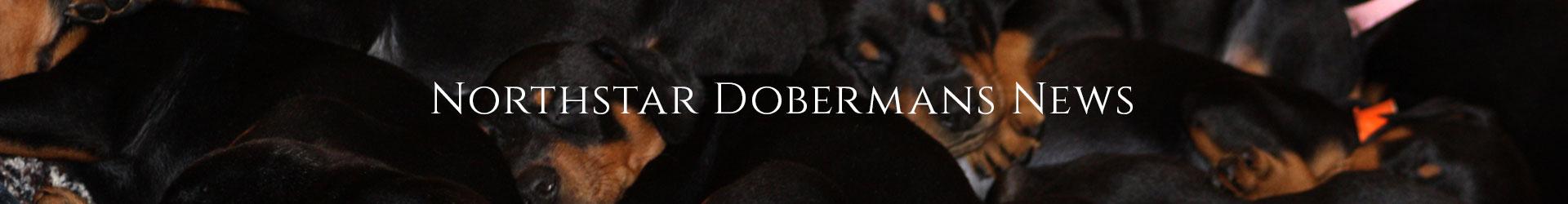 http://northstardobermans.com/nsd/wp-content/uploads/2019/05/bg-news-header.jpg